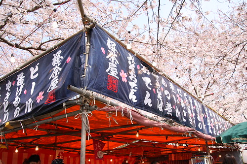 Cherry blossom -Satte no sakura 06-