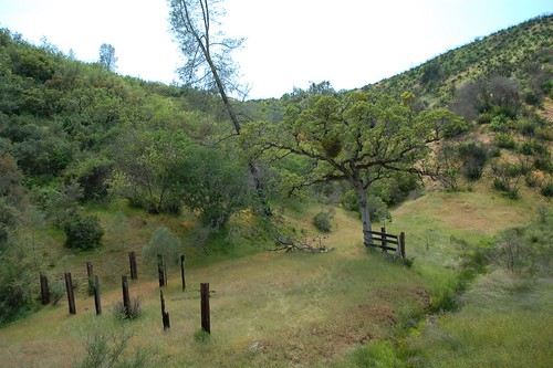 DSC_8178 (Madrone Soda Springs (historical), California, United States) Photo