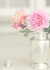 Shabby Roses (Shana Rae {Florabella Collection}) Tags: life flowers light roses stilllife window silver handle still nikon gate natural vase chic shabby d300 windoe takingabreakfromranunculaslol