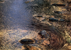 Needles in the stream - film (Bruce Kerridge) Tags: film nature water river landscape interesting bush nikon stream australia nsw newsouthwales wilderness