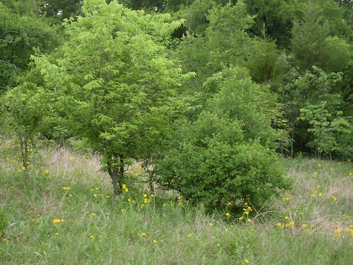 May 2, Arbor Hills Nature Preserve
