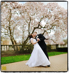 Blossoming. (Ryan Brenizer) Tags: wedding newyork love groom bride nikon kiss bokeh noflash cherryblossoms weddingdress purchase 85mmf14 d700 ryansstrangelenses bokehpanorama brenizermethod