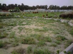 صورة0036 (lateefkuwait) Tags: في تاريخ المزرعة 452009