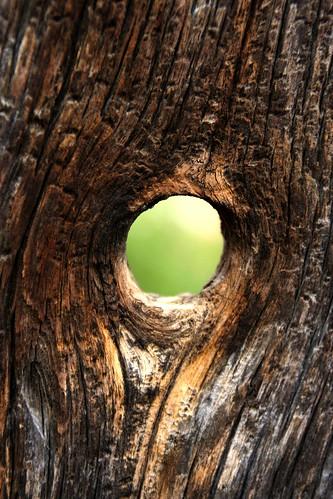 El árbol hueco