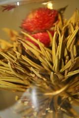 guanxi - tea flower (Bony Bünz AKA Cheek fille AKA Vi AKA L'Effroyable) Tags: flower tea guanxi