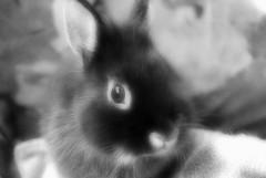 Cachou (AleFletcher) Tags: lapin