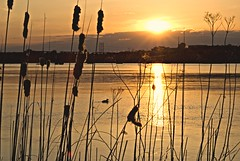 Sunset on the Ottawa River (sacbob) Tags: sunset river reeds sony ottawa rushes a100 spao