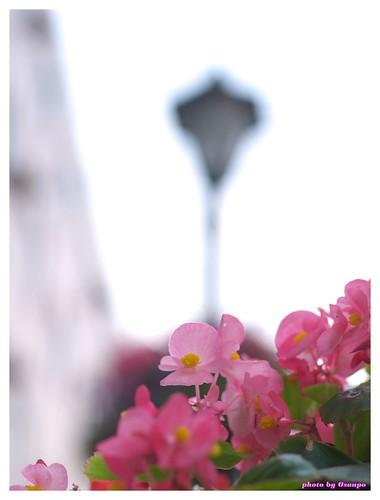 Horikawa Flower Festival 20090327 #09