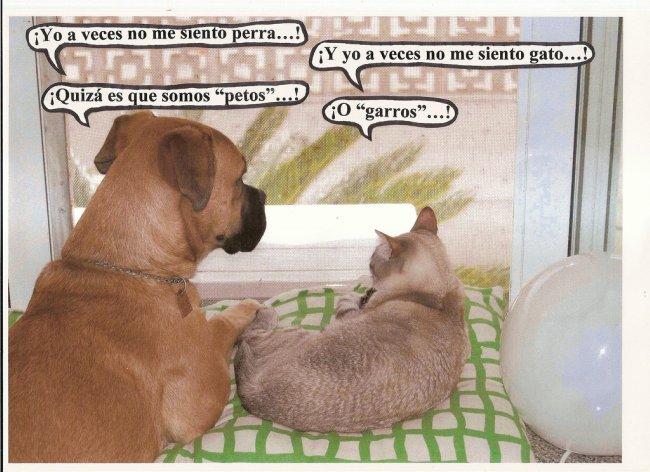dialogos de Nina y Gus