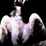 Vulture thumbnail