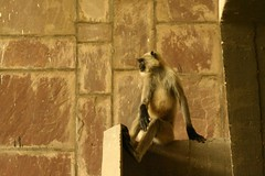 corb's kids... space hijackers! (Dharmesh Thakker) Tags: light india architecture fun concrete monkey space le mills hijack corbusier ahmedabad primates gujrat hijacking hijacker millowners aatma