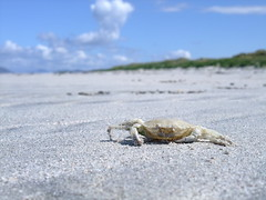 Crab Shell at Clachan Sands - North Uist (fotofal) Tags: island islands scotland westernisles isles uist hebrides benbecula southuist outerhebrides berneray hebridean eriskay lochmaddy northuist lochboisdale uists outerisles