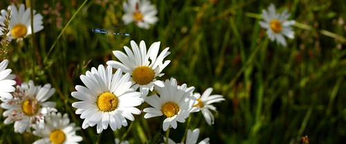 flowermeadow4