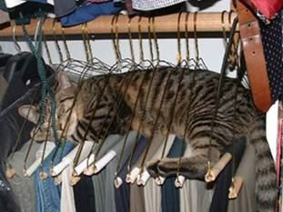 Hanger Cat