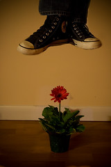 Day135 (lindyhazel.com - What 366?) Tags: flowers levitation manipulation converse roulette project365 project3652010