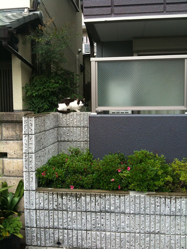 Today's Cat@2010-05-22