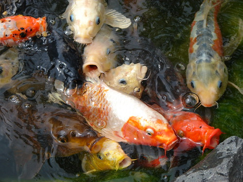 Feeding the Fish