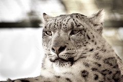 Wildlife Heritage Foundation