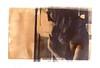 (noizmann) Tags: bw darkroom kodaktmax3200 cameraoscura cartabaritata