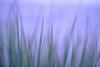 Another Vision BY ROSA (HamimCHOWDHURY  [Read my profile before you fol) Tags: blue portrait black green nature canon faces sony surreal dhaka vaio rgb sylhet bangladesh framebangladesh digombor 595036hamimchowdhury 60ddlsreoscolorfulblackandwhitered lifeincrediblebengalgettyimagesbangladeshq2gettyimageshobigonj