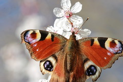 Butterfly  (Sarah Dzim) Tags: colour butterfly fly away