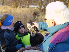 een waterhoen die het niet haalde door de barre omstandigheden (shana_duwein) Tags: 10 ganzen 2009 januari