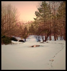 The softness of winter (Amy V. Miller) Tags: pink trees winter sunset sky snow nature landscape frozen pond good indiana than better mindigtopponalwaysontop
