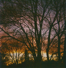 (ChristinaBrown) Tags: pink trees winter sunset orange colors beautiful yellow polaroid cool purple cam 600