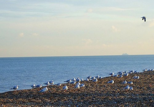 Deal seagulls