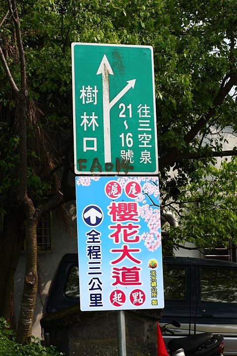 淡水滬尾櫻花大道29