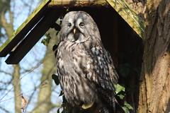 IMG_1410 (richardkortland) Tags: rhenen dierenpark uil ouwehand