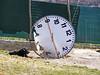 in attesa... (Lollo [neon]) Tags: cane orologio stranezze creatività oniricamente trashbitreloaded