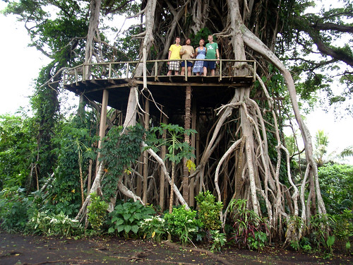 giant banyan tree, Tanna.