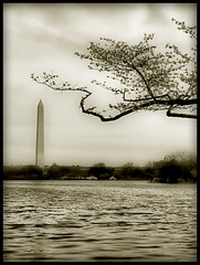 DC Zen (` Toshio ') Tags: flowers trees sky blackandwhite bw flower tree water sepia cherry washingtondc dc washington petals districtofcolumbia waves branch artistic branches blossoms perspective wideangle basin zen cherryblossoms duotone washingtonmonument tidal tidalbasin cherryblossomfestival toshio platinumheartaward