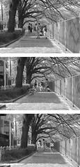 町田樹 画像81