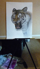 Tiger on paper (WWW.BEROK.ES) Tags: portrait color animal real graffiti sketch drawing pastel tiger lapiz oil draw dibujo tigre realismo realism boceto pastelcolor photorealism hiperrealismo salvaje hambriento animalsalvaje berok violento pasteloil colorpastel