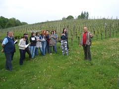 Im Weingarten von Ploder-Rosenberg