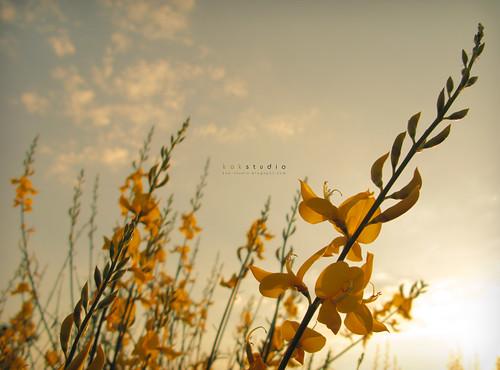 · amarillo ·