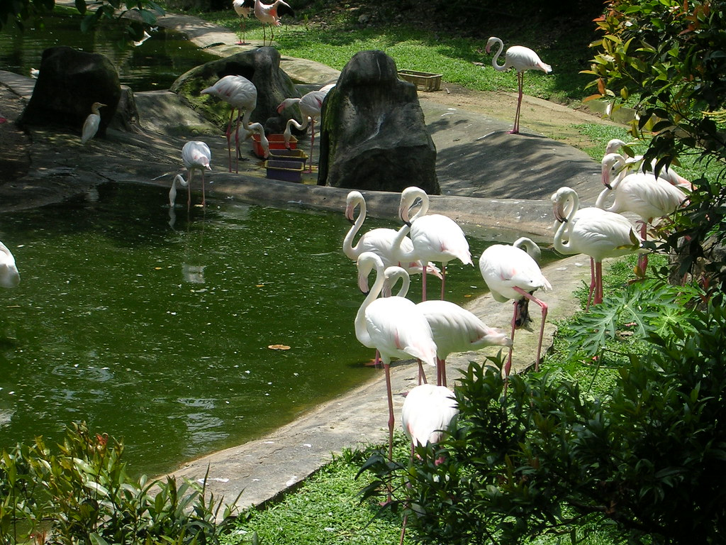 Flamingoes - Bird Park