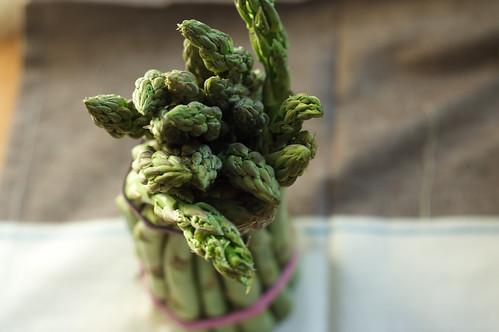 Asparagi Heads