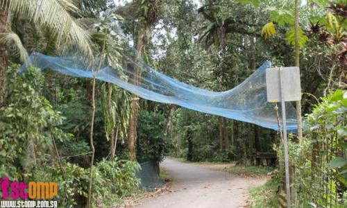 Blue net at Pulau Ubin can save your life