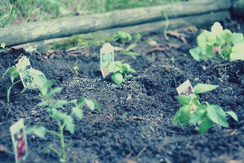 our small garden