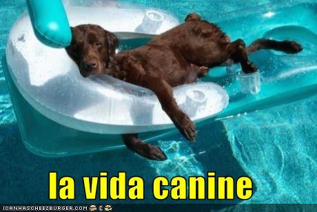 la vida canine
