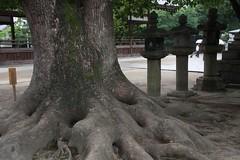 Fujinomori Shrine