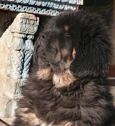 Himalay-enjoy-sun