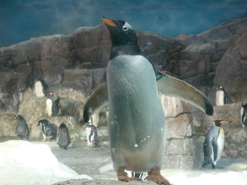 Pingüinos en el Ecosistema de los Polos