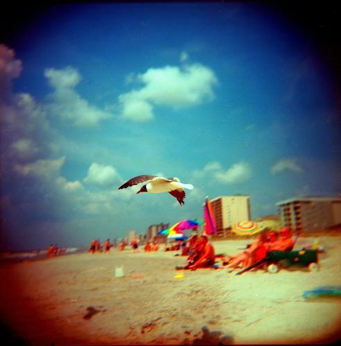 chester the seagul
