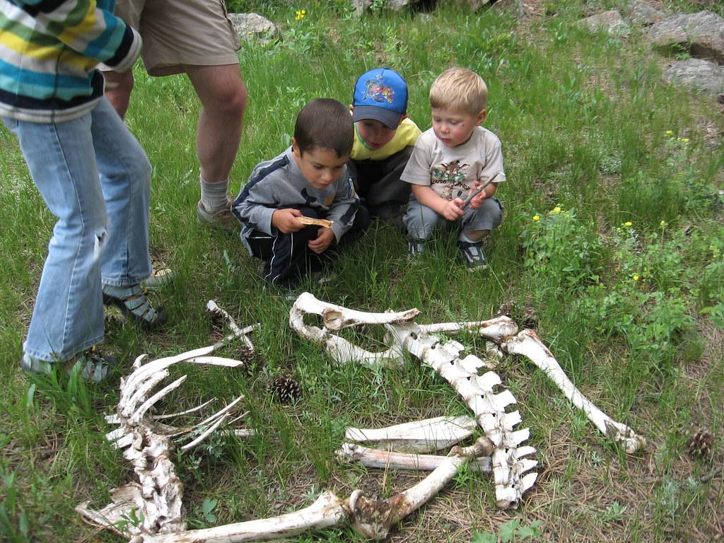 boys and elk skeleton