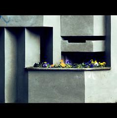PENSIERI DI CEMENTO (Elena Fedeli) Tags: italy rome roma concrete italia cemento pansè casaletto violedelpensiero buildingentrace entratedipalazzi