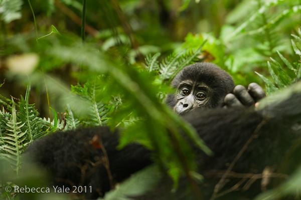 RYALE_Rwanda_Uganda_Safari-114